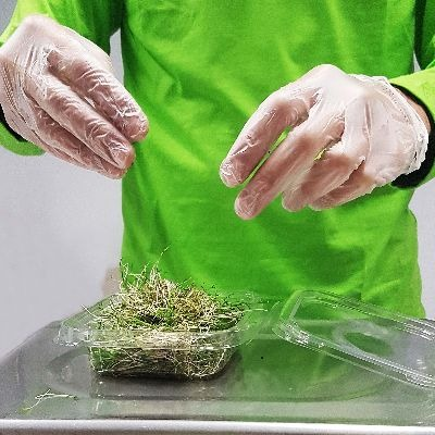 embalagem e pesagem de microgreens na pink farms