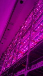 fazenda verticial pink farms