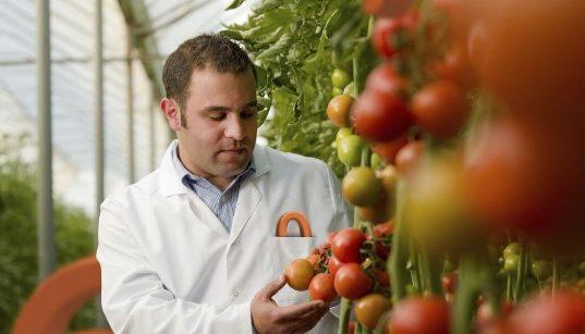 plantacao de tomate rastreabilidade