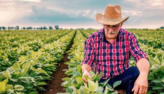 homem em um campo de plantação de soja