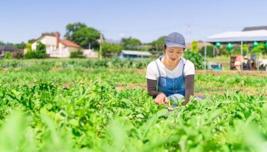 mulher no campo em platacao de hortaliças