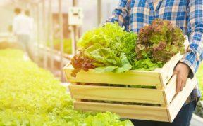 agricultor na plantacao segura cesta de verduras