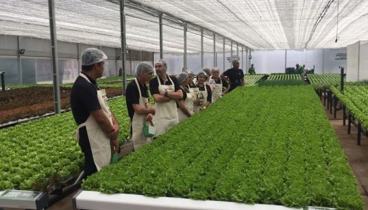 projeto fazenda urbana da embrapii, sebrae e be green