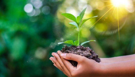 maos segurando planta